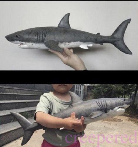 It's a Bigger Shark! 25pt4B