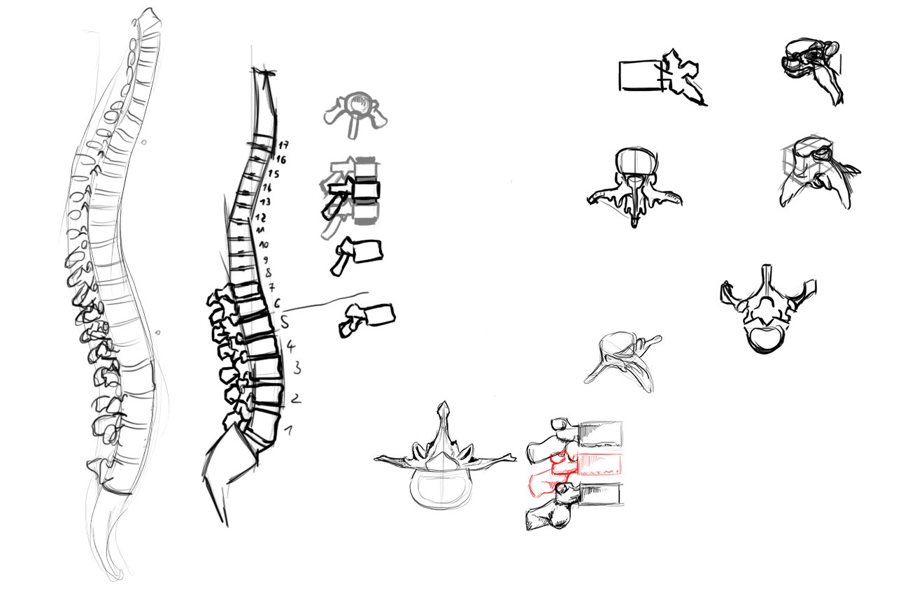 [defis] Lundi Anatomie C5it
