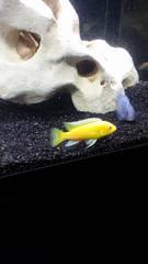 nom de mes poissons? 7GRXmi