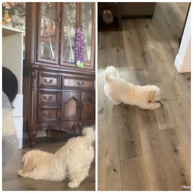 Rosie—my dog PAWwa8