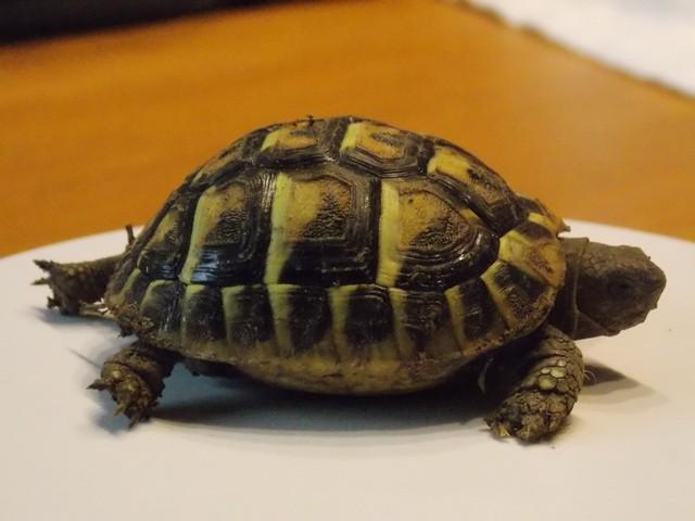 identifier mes 2 tortues 2s3WJ4