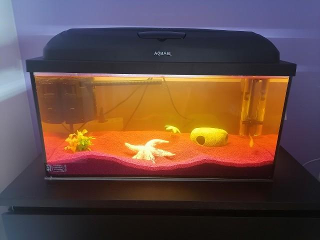 Débutant en aquario, aquarium 53L poisson rouge  EhGCJR