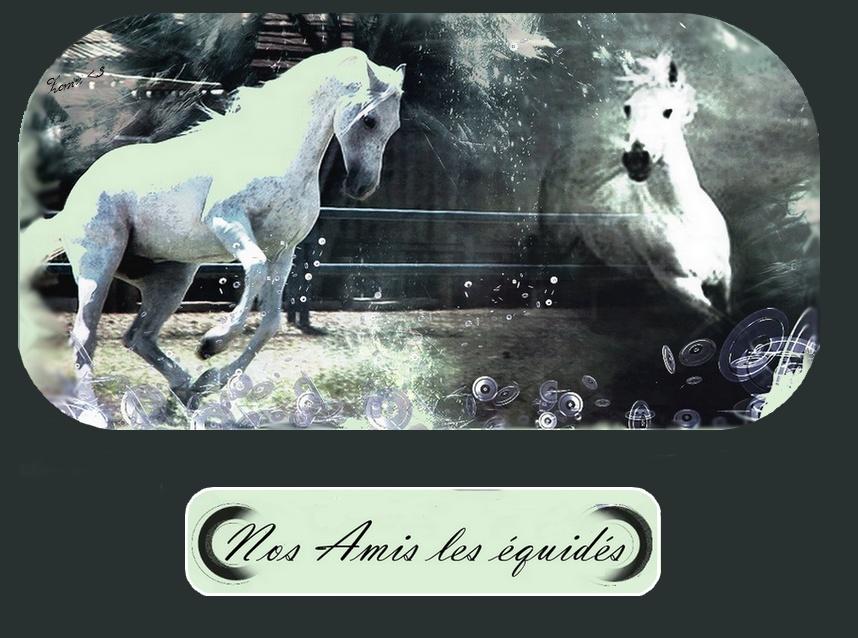 Notre troupe de spectacle equestre libertydream