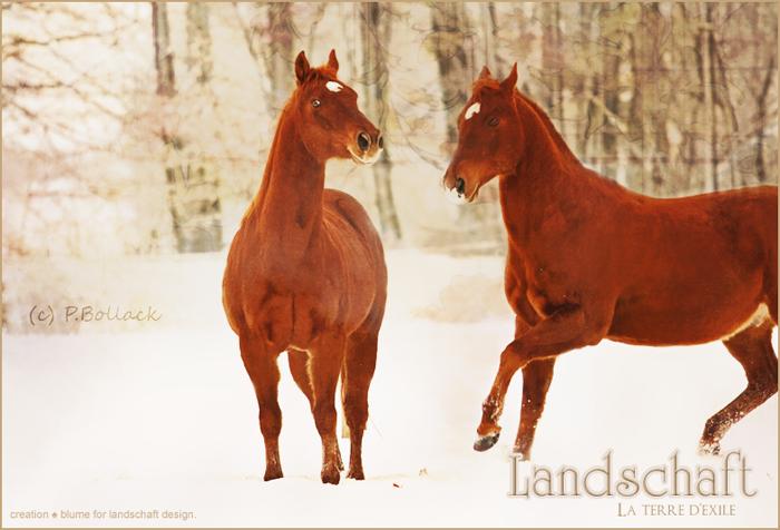 Rêves de chevaux