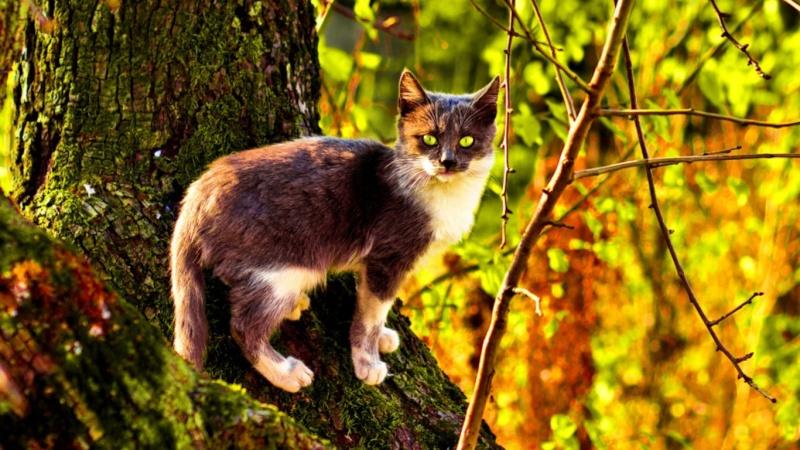 Warrrior Cats