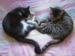 Sentient_Cats