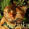 Shatai