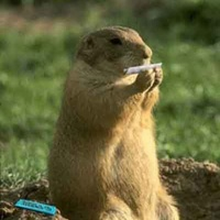 MarmotteMix