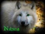 Niteria