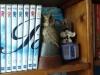 Ma collection de DVD de la série Rawhide  et la série  poly