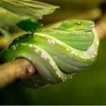 Serpentlove