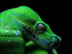 Snakeman32