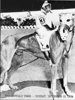 laquintagreyhounds