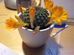 kaktus_konstrukteur