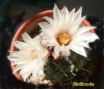 BlnBlondie