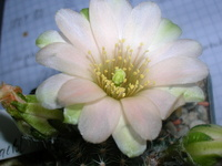 Pflanzenbestimmung 5045-34