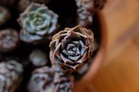 Pflanzenlust