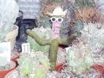 kaktus4all