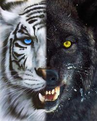 Tiger_Wolf