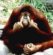 orangotango111