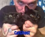 CAT-GHOST