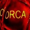 orca464
