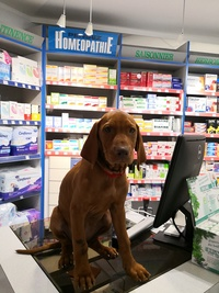 Le Pharmacien Fou