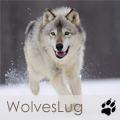 WolvesLug