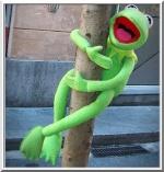 grenouille