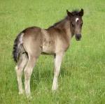 chevaux M