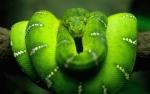Le Serpent Vert-77