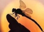 dragonfly1804
