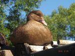 Птицы, цыплята 5743-14
