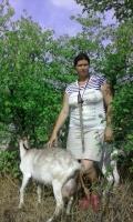 Домашний скот 7340-19