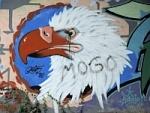 Adler im Wind