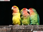 threelittlebirds