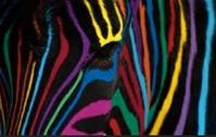 mumy-zebra