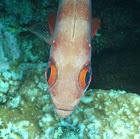 Maud Underwater