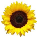 sunshine1981