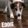 Eddie2012