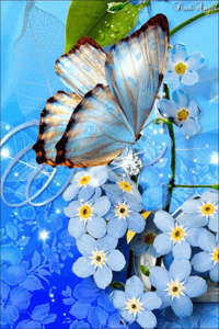 Papillon Bleu !!!!