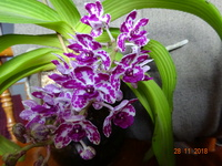 Orchideenforum 1008-24