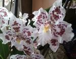 Orchideen - Neuzugänge 1767-80