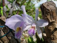 Orchideenforum 2829-79