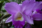 Orchideenforum 447-85
