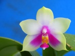 Orchideenforum 824-29