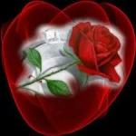 ورده الحب