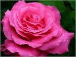 فاطمة الزهراء