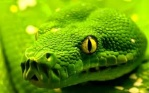 GreenSnake