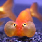 Présentations et Discussions sur vos fish-rooms 1074-96